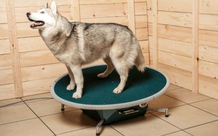 Balanční terapie a trénink