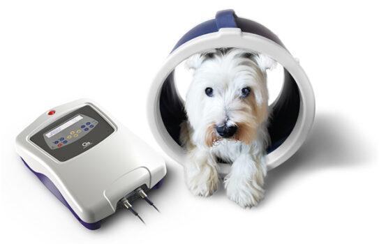 Veterinární magnetoterapie